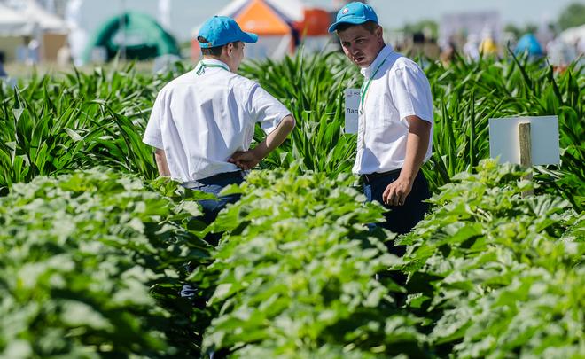 «В Татарстане местное сельское хозяйство очень сильно зависит от субсидий»