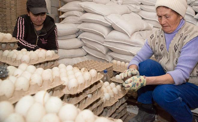 ВУдмуртии отыскали неменее четырех тонн зараженного птичьим гриппом мяса
