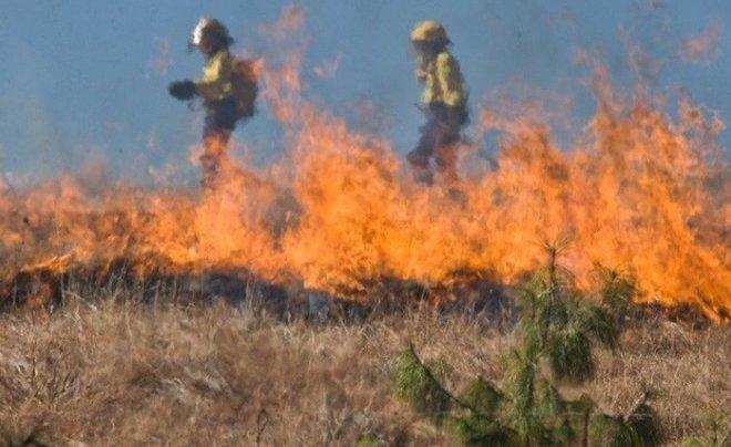 Картинки по запросу В МЧС планируют увеличить штрафы для виновников лесных пожаров
