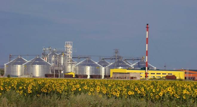 В Российской Федерации  упали цены наподсолнечник иподсолнечное масло