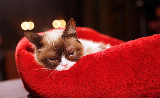 Alibaba ищет наработу кота для продажи «милоты»