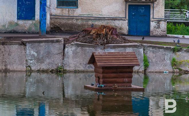 Профессионалы призвали городских жителей подкармливать уток, прижившихся вКазани