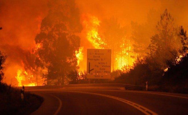 Число погибших  лесных пожаров вПортугалии выросло до  63 человек