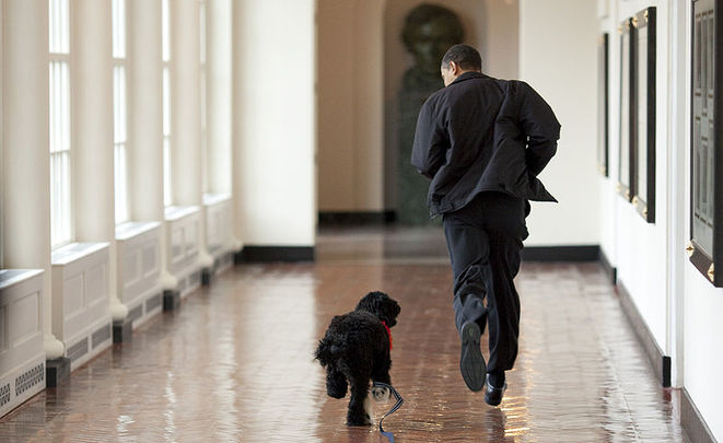 Принадлежащая Обаме собачка укусила приятельницу семьи президента